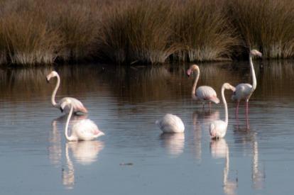 http---www.blogcdn.com-slideshows-images-slides-380-126-1-S3801261-slug-l-flamingos-2