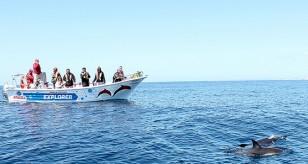 ophelia-catamaran40